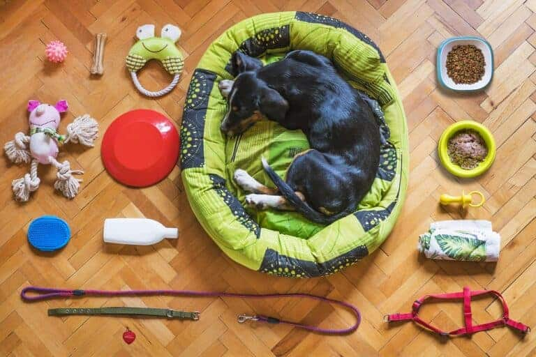 dog, pet, dog bed